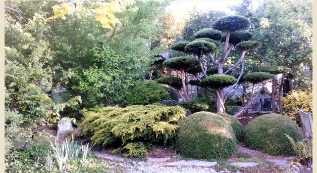 Taille japonaise vannes dans le morbihan en bretagne le for Entretien jardin vannes
